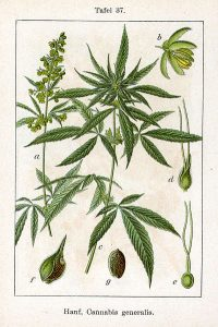 Cannabis CE