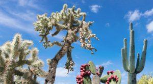 desert southwest cactus
