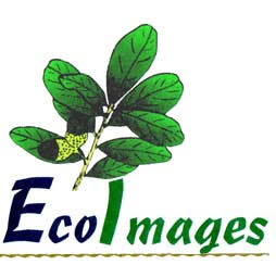 EcoImages logo