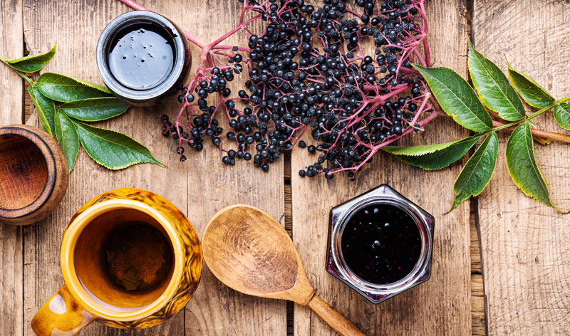 elderberry for immunological balance