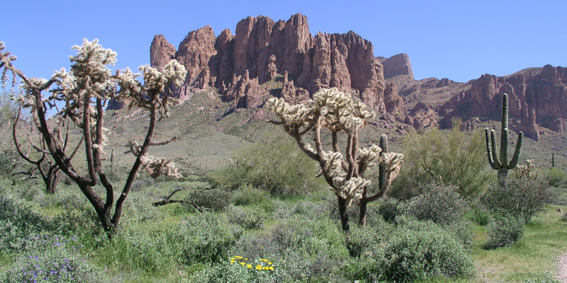 Southwest desert near Tempe, Arizona, the site of herbal medicine conference.