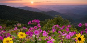 herbal conference in the Blue Ridge Mountains